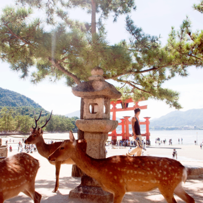 Miyajima Island, {Mainland} Japan
