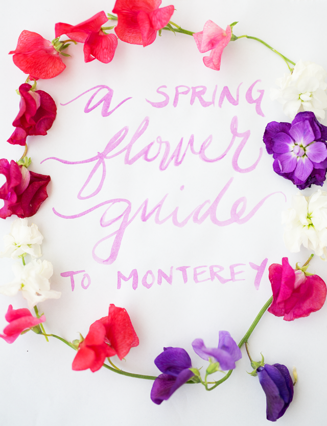 A Spring Flower Guide To Monterey Marshalls Abroad