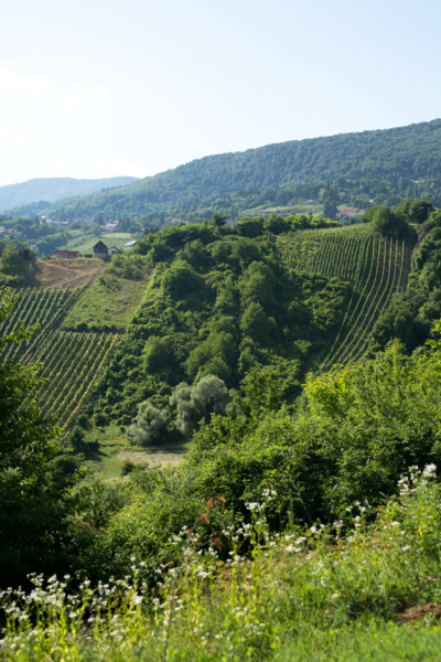 Croatia's Gorgeous Plešivica Wine Region