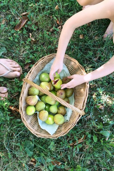 Two Weeks Left in Croatia… Today We're Picking Figs!